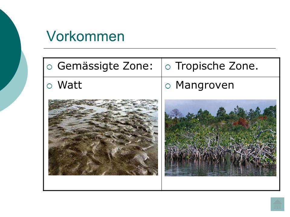 Vorkommen Gemässigte Zone: Tropische Zone. Watt Mangroven