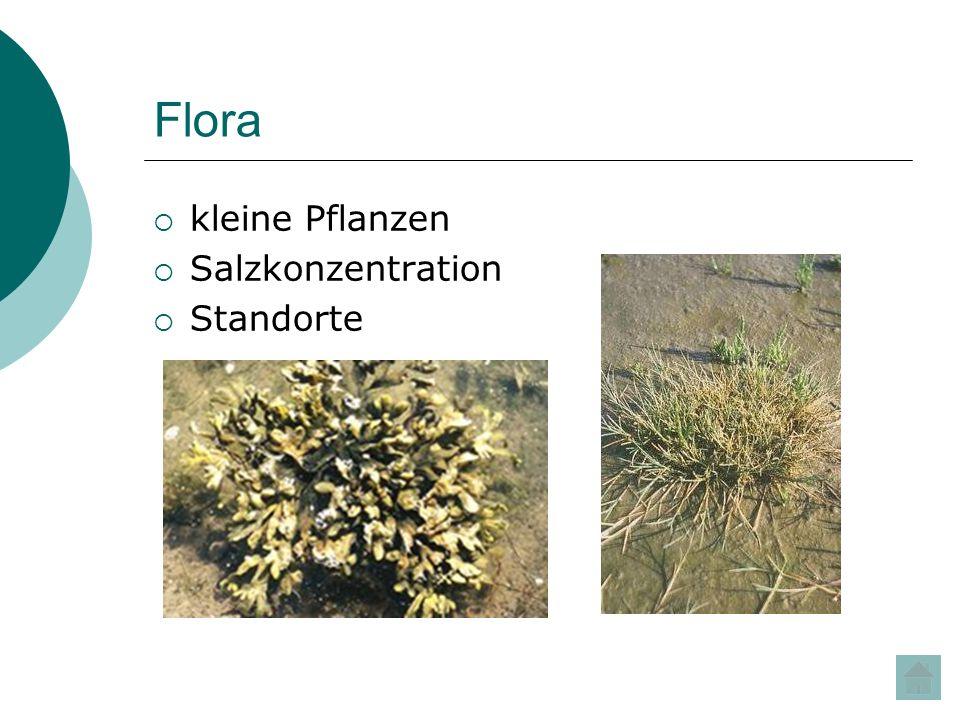 Flora kleine Pflanzen Salzkonzentration Standorte