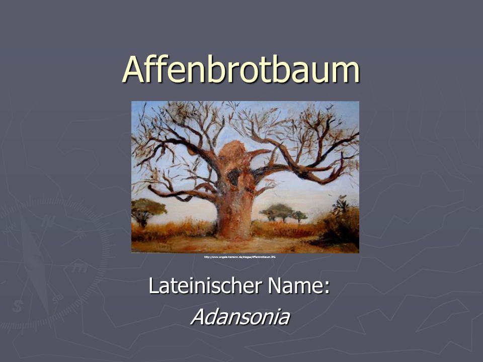 Lateinischer Name: Adansonia