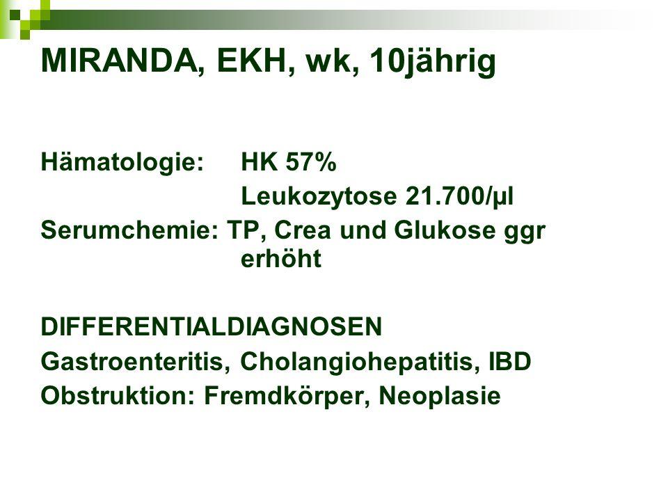 MIRANDA, EKH, wk, 10jährig Hämatologie: HK 57% Leukozytose 21.700/µl