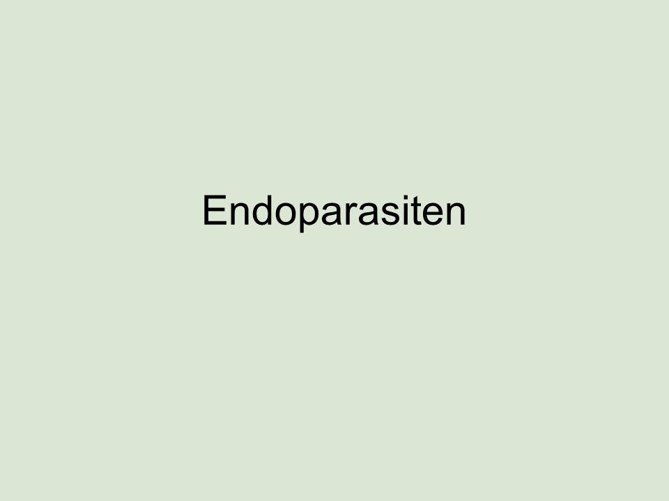 Endoparasiten