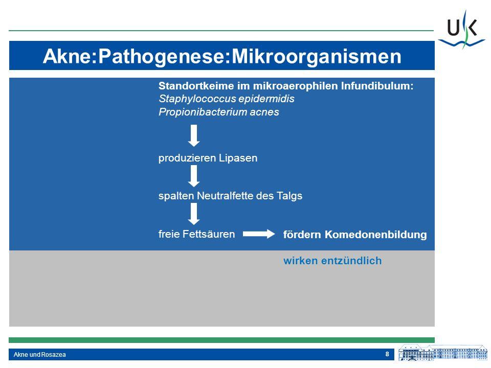 Akne:Pathogenese:Mikroorganismen