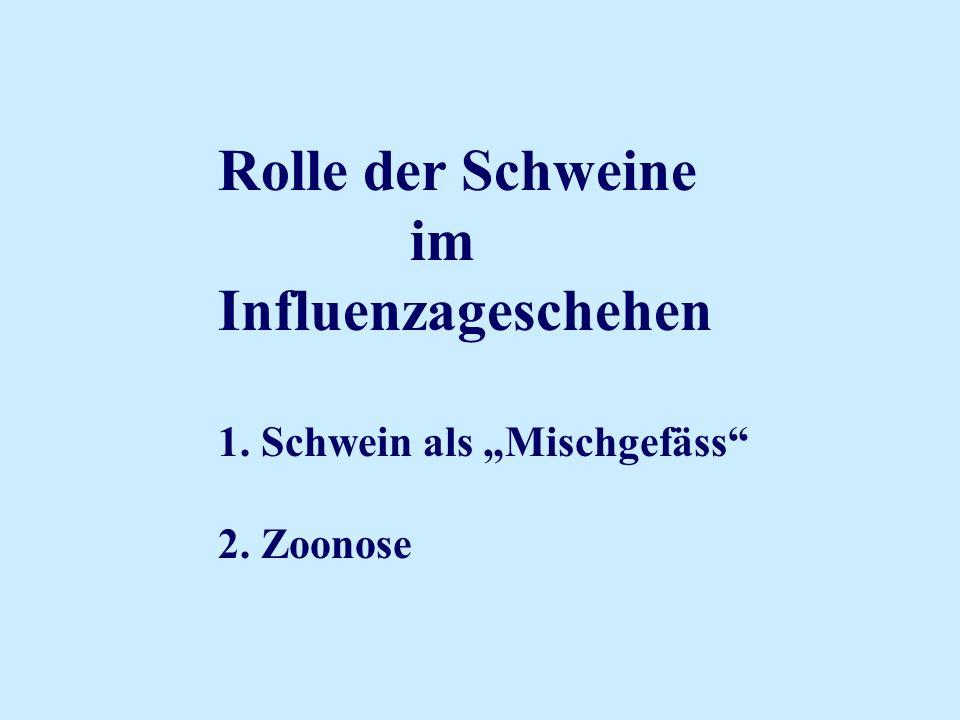 """Rolle der Schweine im Influenzageschehen 1. Schwein als """"Mischgefäss"""