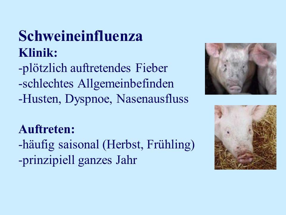 Schweineinfluenza Klinik: plötzlich auftretendes Fieber