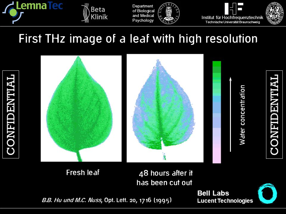 First THz image of a leaf with high resolution