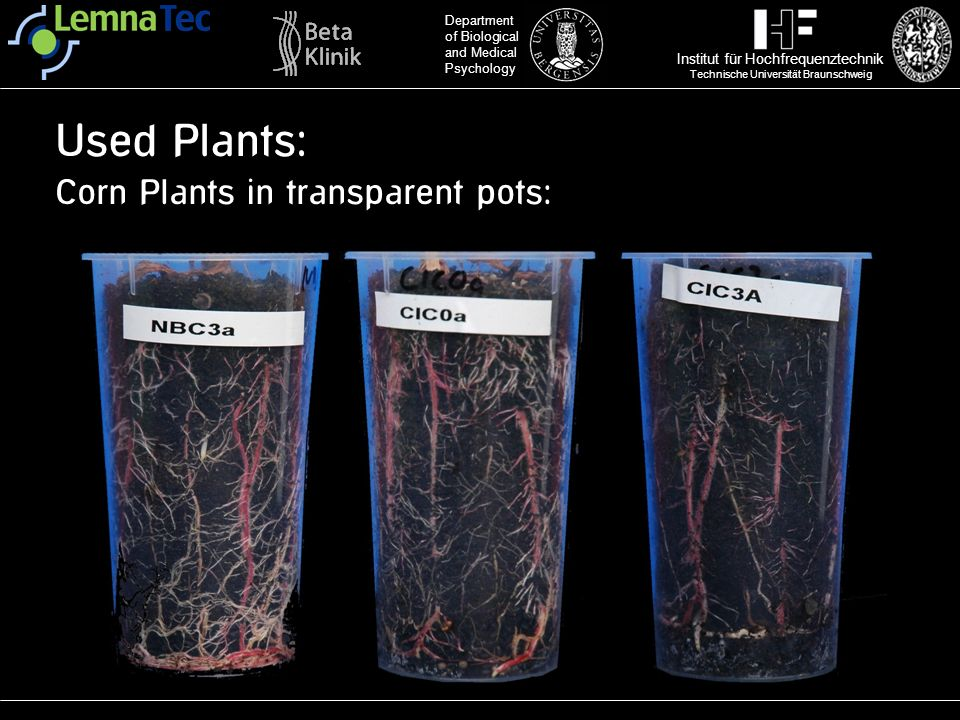 Used Plants: Corn Plants in transparent pots: