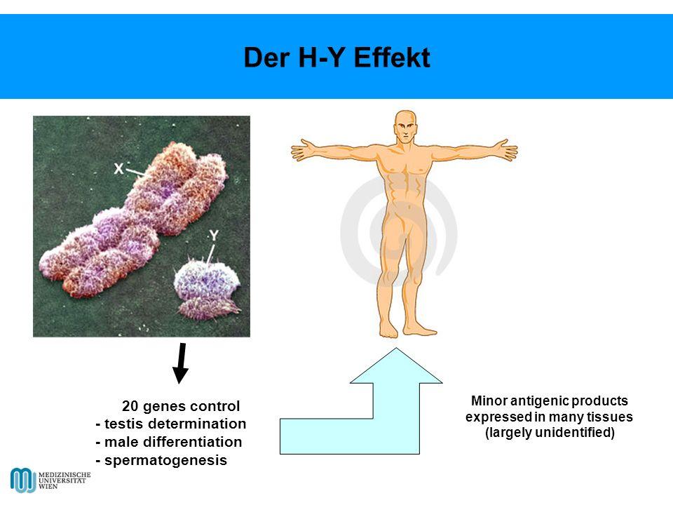 Der H-Y Effekt 20 genes control - testis determination