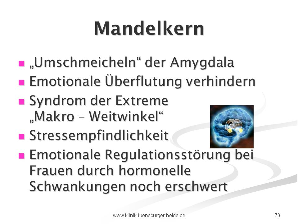 """Mandelkern """"Umschmeicheln der Amygdala"""