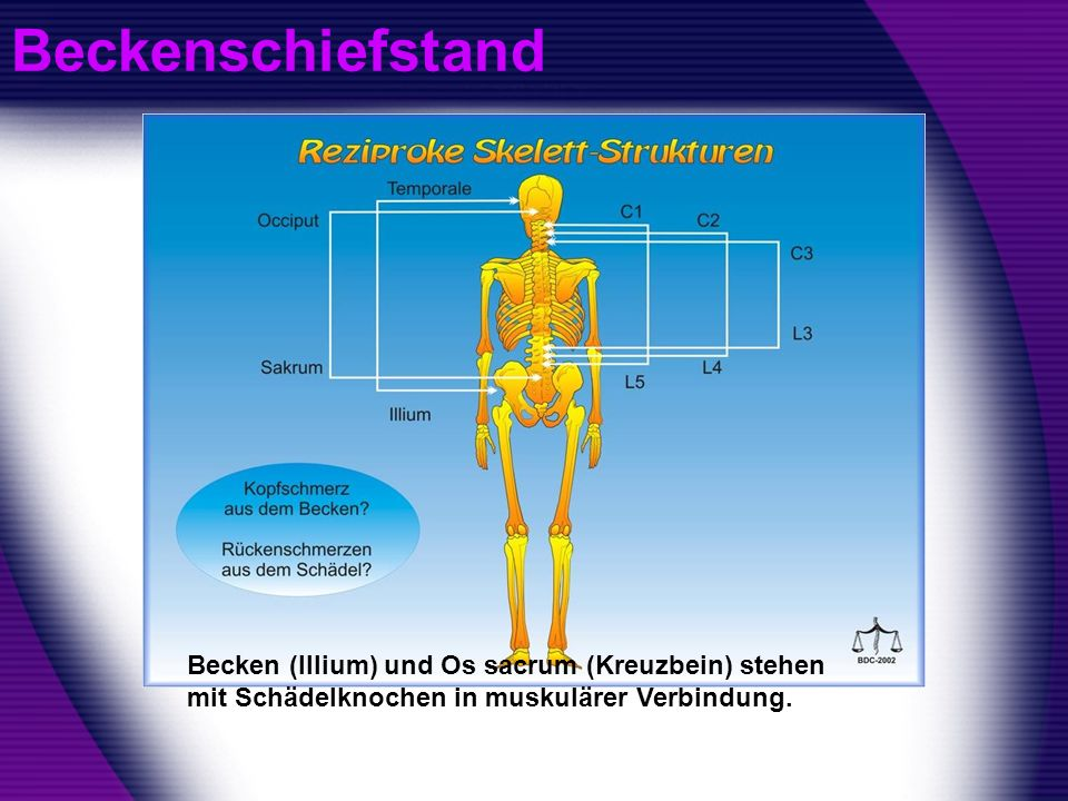 BeckenschiefstandBecken (Illium) und Os sacrum (Kreuzbein) stehen mit Schädelknochen in muskulärer Verbindung.