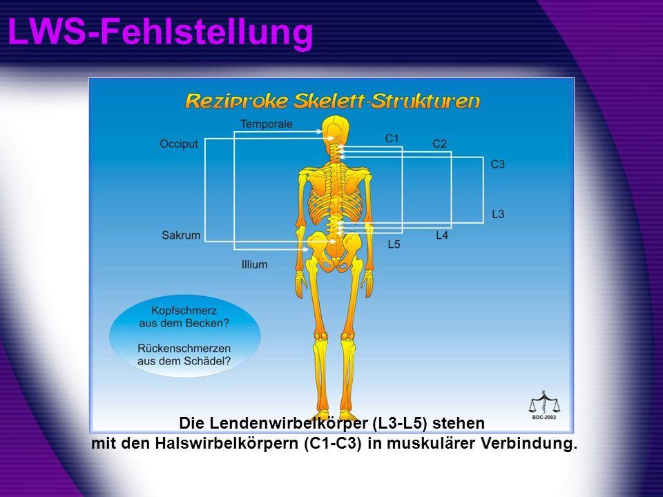 LWS-FehlstellungDie Lendenwirbelkörper (L3-L5) stehen mit den Halswirbelkörpern (C1-C3) in muskulärer Verbindung.