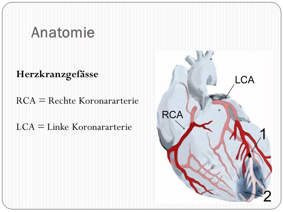 Anatomie Herzkranzgefässe RCA = Rechte Koronararterie