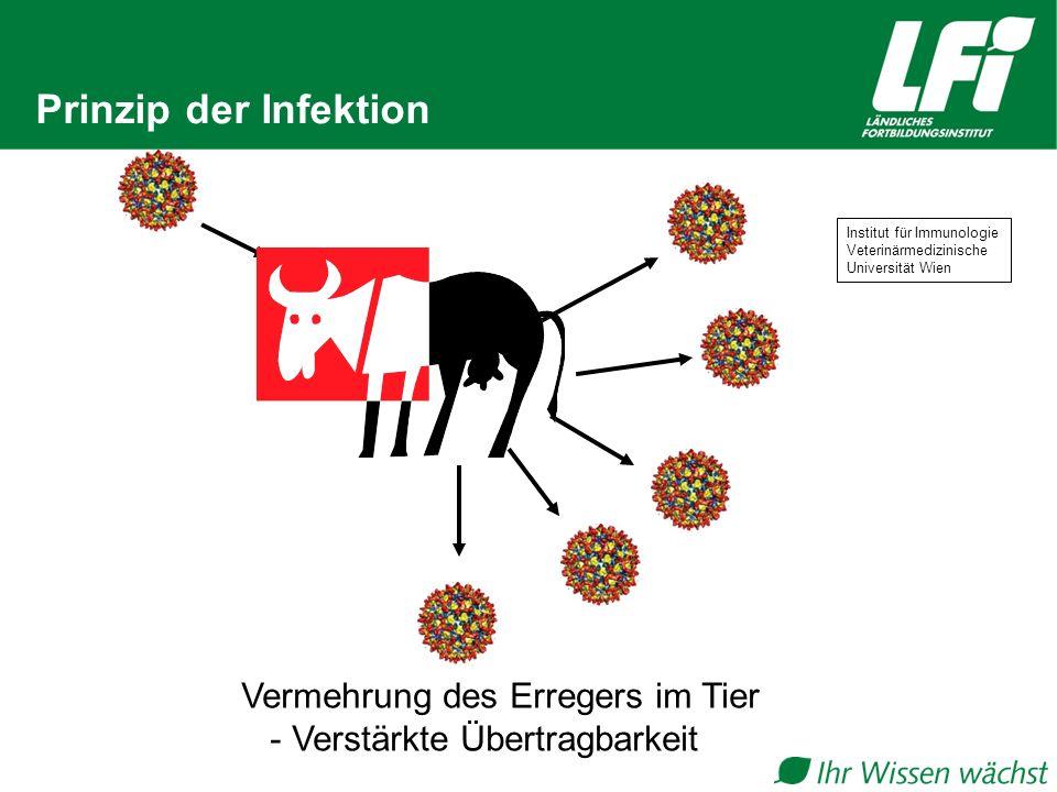 Prinzip der Infektion Vermehrung des Erregers im Tier