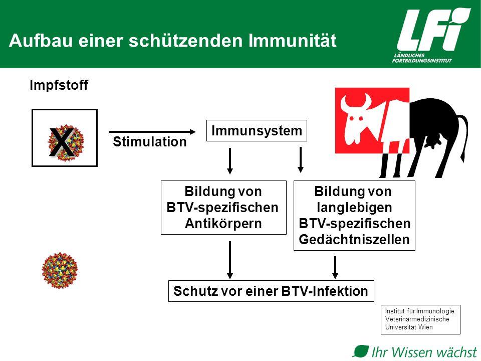 x Aufbau einer schützenden Immunität Impfstoff Immunsystem Stimulation