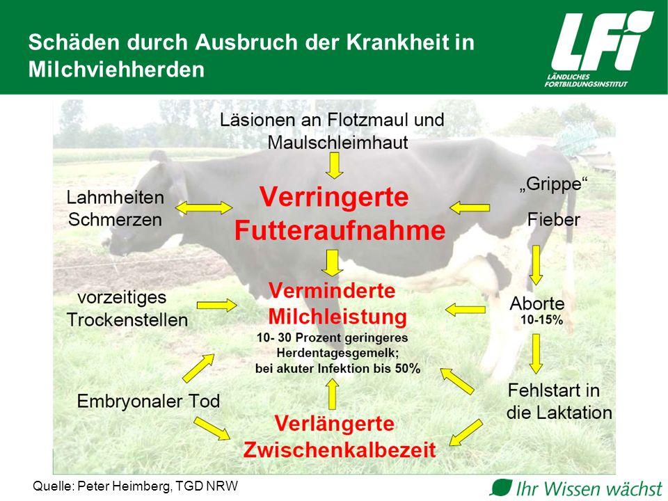 Schäden durch Ausbruch der Krankheit in Milchviehherden