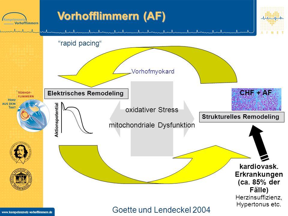 Vorhofflimmern (AF) Goette und Lendeckel 2004 rapid pacing CHF + AF