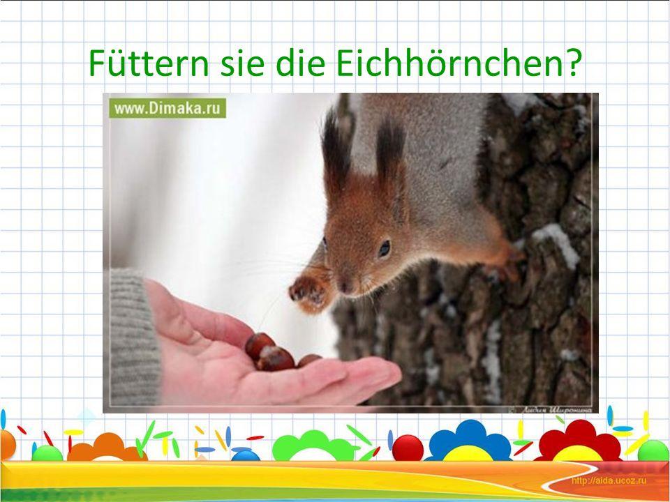 Füttern sie die Eichhörnchen