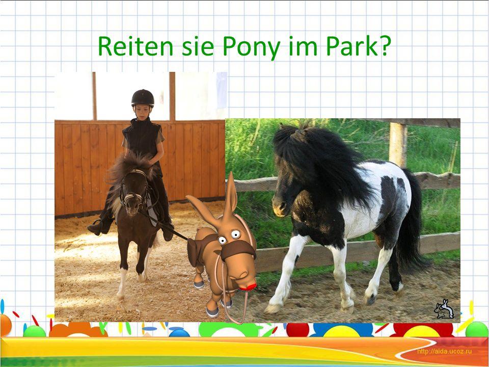 Reiten sie Pony im Park