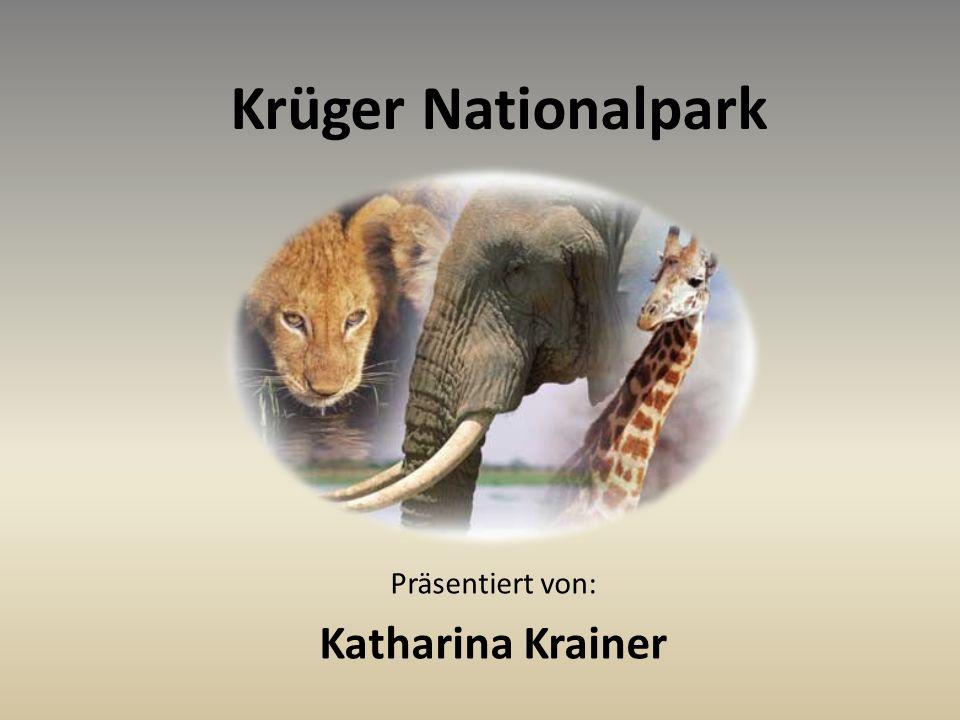 Präsentiert von: Katharina Krainer