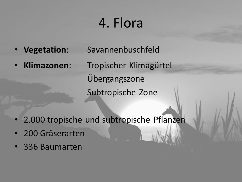 4. Flora Vegetation: Savannenbuschfeld