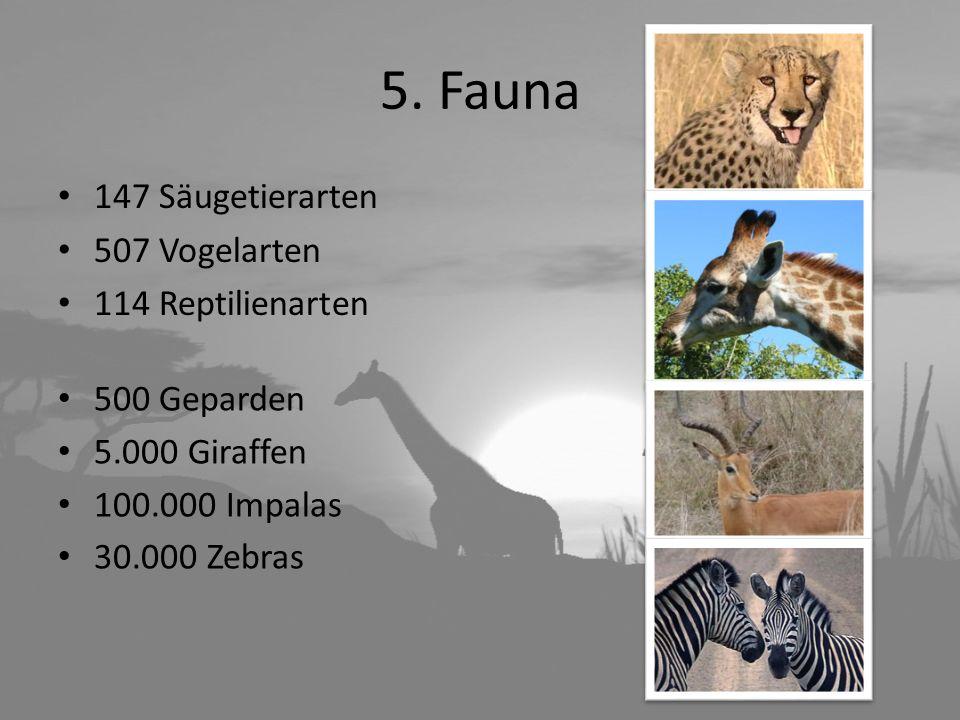 5. Fauna 147 Säugetierarten 507 Vogelarten 114 Reptilienarten