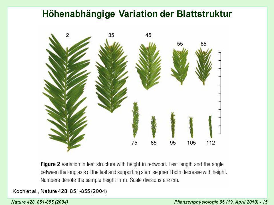 Höhenabhängige Variation der Blattstruktur
