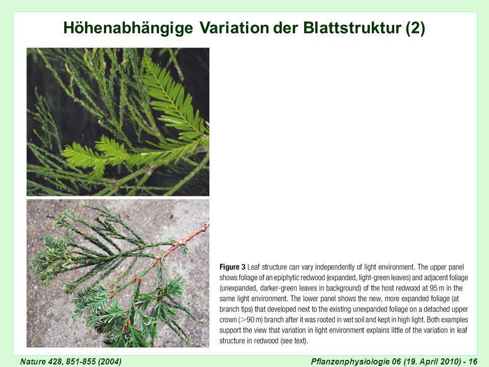 Höhenabhängige Variation der Blattstruktur (2)