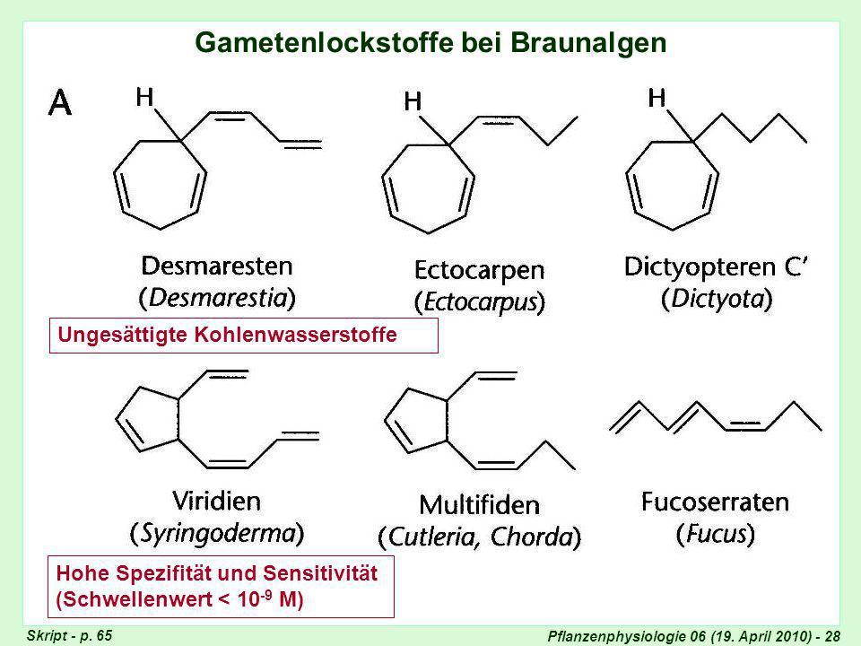 Lockstoff-Chemie: Braunalgen