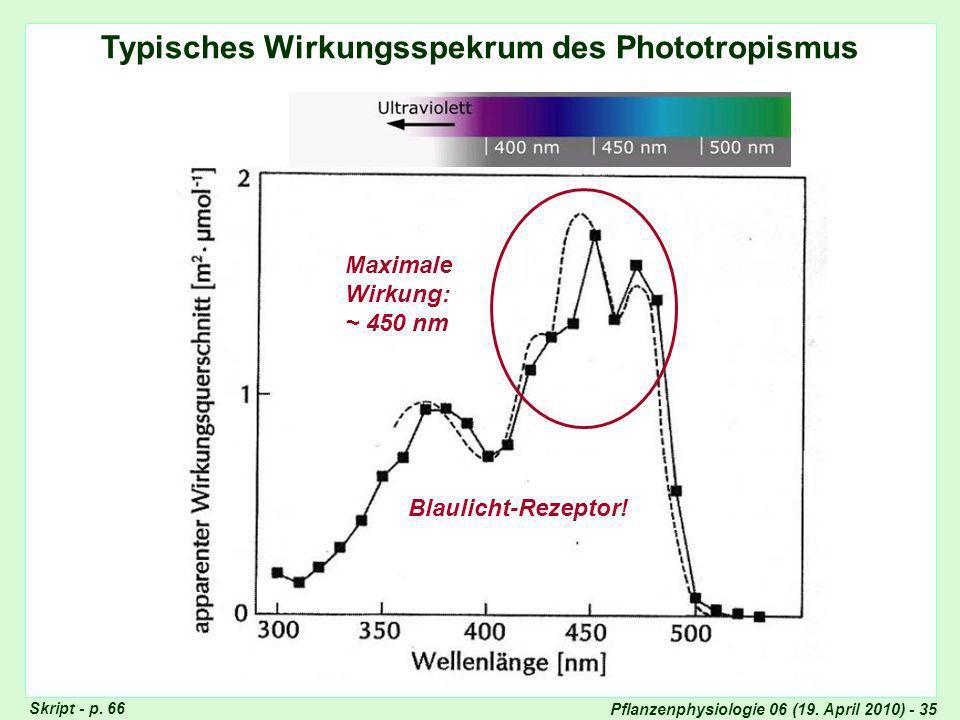 Typisches Wirkungsspekrum des Phototropismus