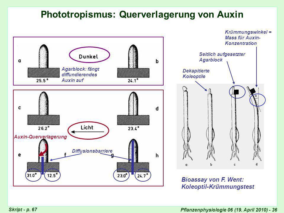 Phototropismus und Querverlagerung von Auxin