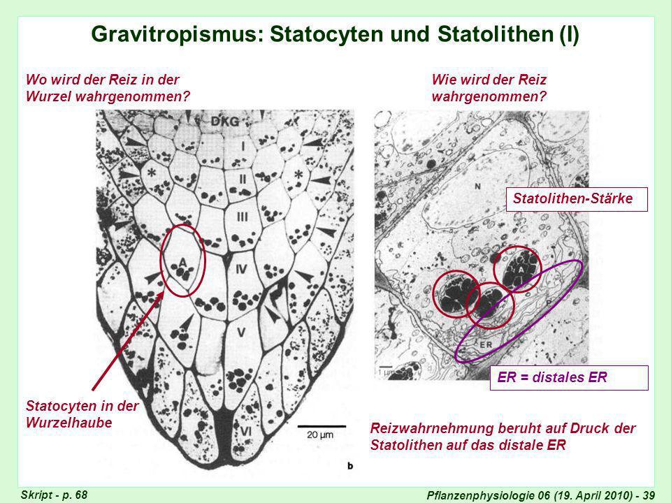 Gravitropismus: Statocyten und Statolithen (I)