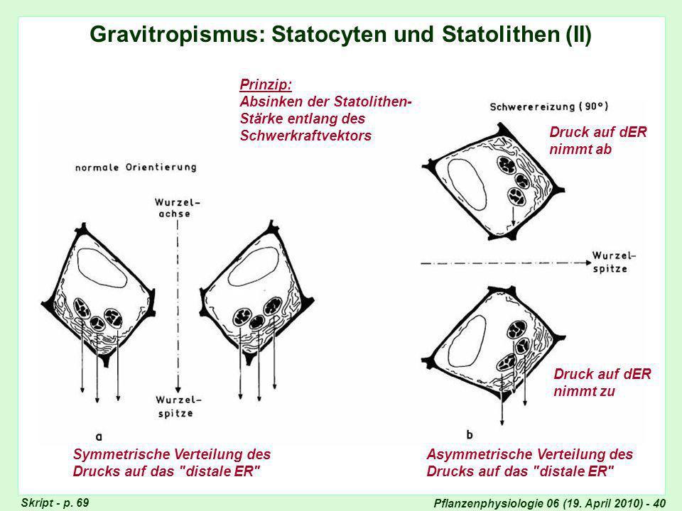 Statocyten und Statholithen