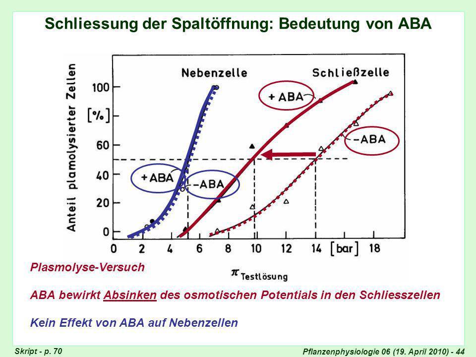 Schliessung der Spaltöffnung: Bedeutung von ABA