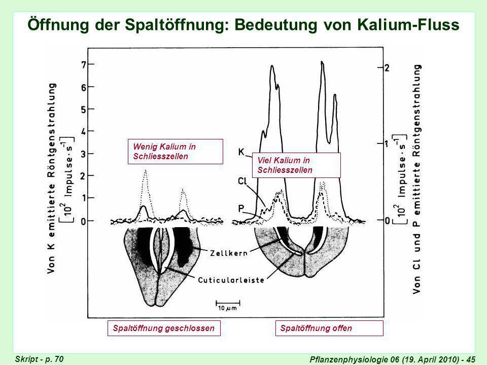 Öffnung der Spaltöffnung: Bedeutung von Kalium-Fluss