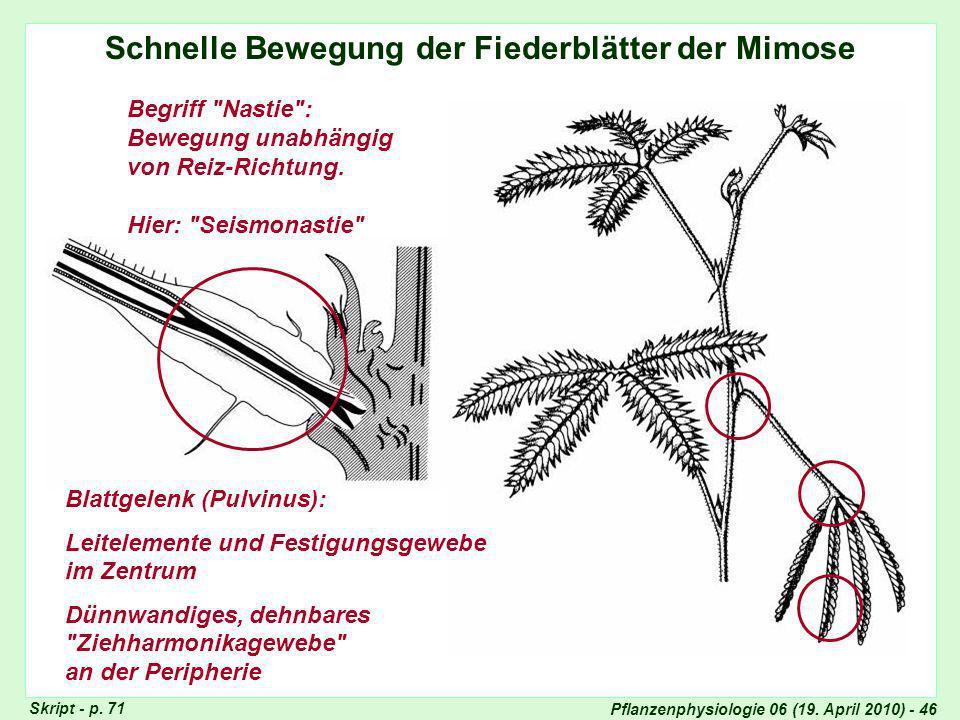 Schnelle Bewegung der Fiederblätter der Mimose