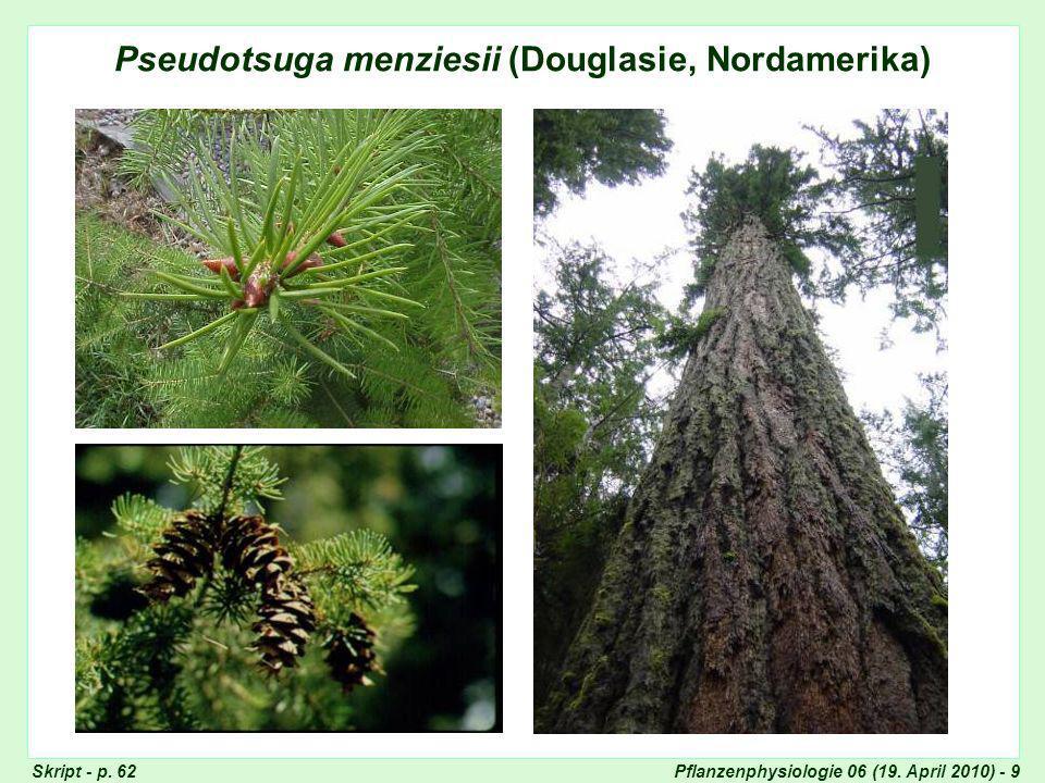 Pseudotsuga menziesii (Douglasie, Nordamerika)