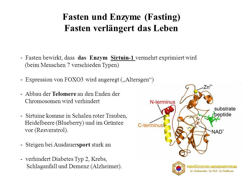 Fasten und Enzyme (Fasting) Fasten verlängert das Leben