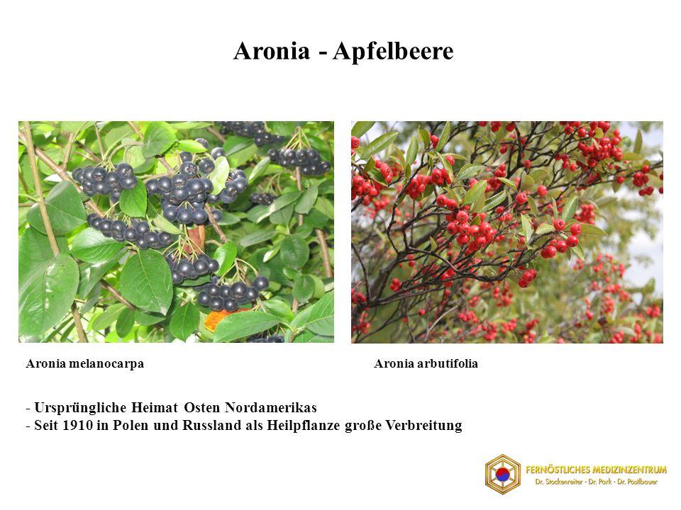 Aronia - Apfelbeere - Ursprüngliche Heimat Osten Nordamerikas