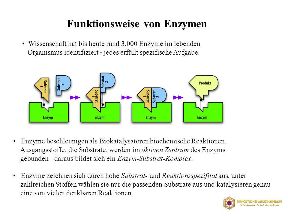 Funktionsweise von Enzymen
