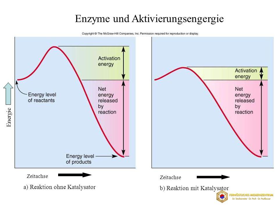 Enzyme und Aktivierungsengergie