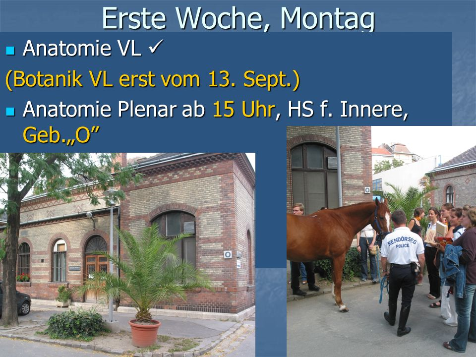 Erste Woche, Montag Anatomie VL  (Botanik VL erst vom 13. Sept.)