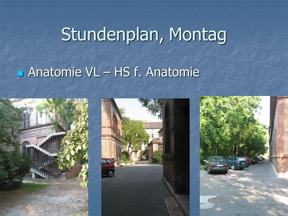 Stundenplan, Montag Anatomie VL – HS f. Anatomie