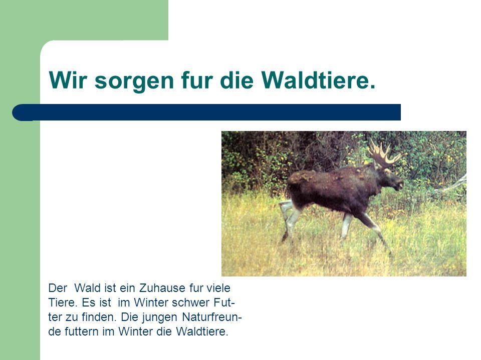 Wir sorgen fur die Waldtiere.