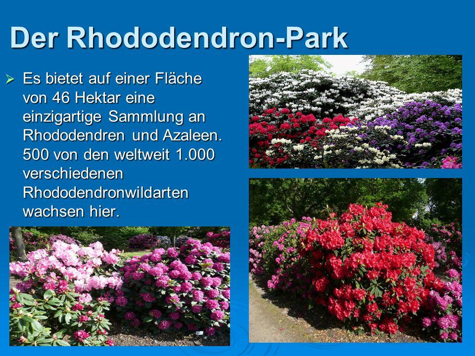 Der Rhododendron-Park