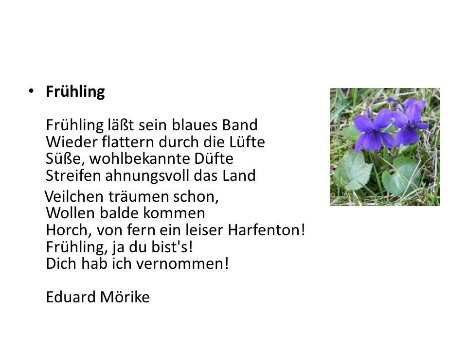 Frühling Frühling läßt sein blaues Band Wieder flattern durch die Lüfte Süße, wohlbekannte Düfte Streifen ahnungsvoll das Land