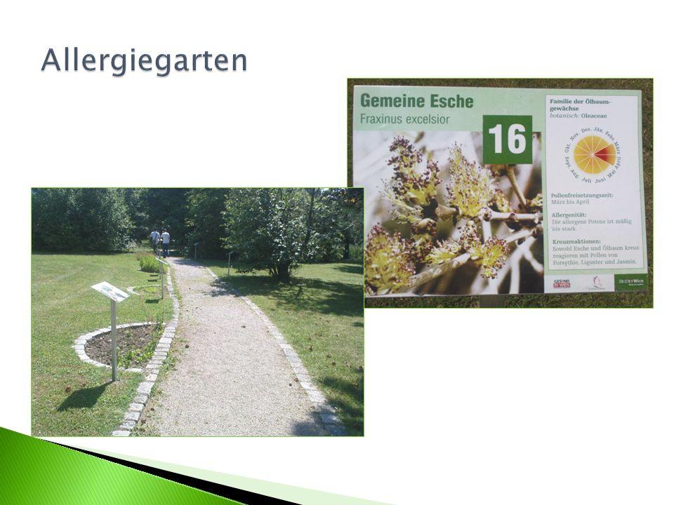 Allergiegarten