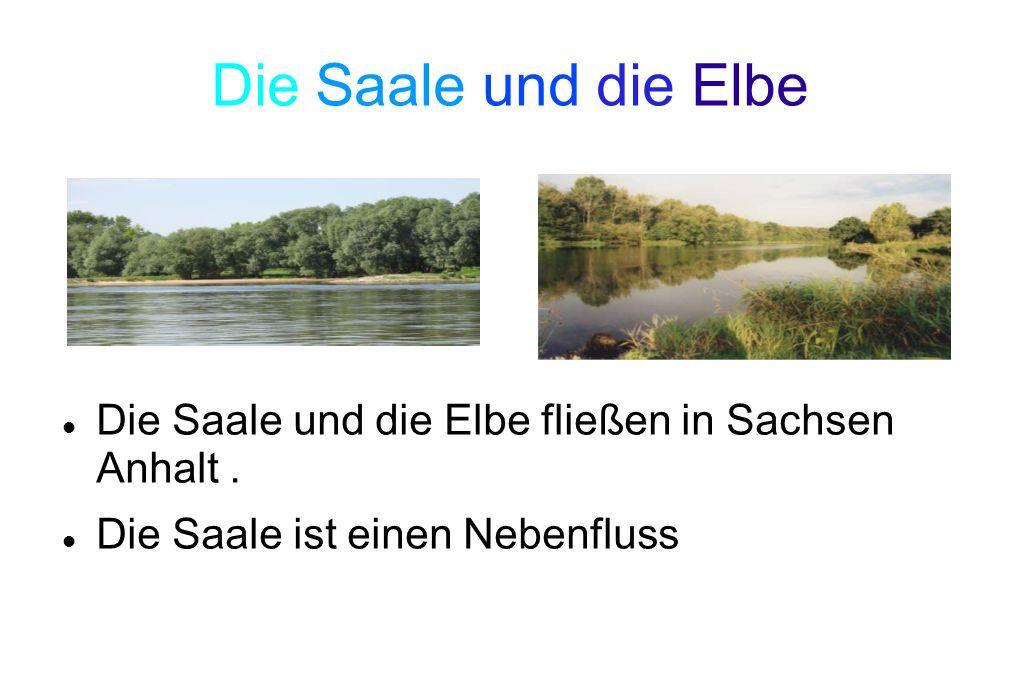 Die Saale und die Elbe Die Saale und die Elbe fließen in Sachsen Anhalt .