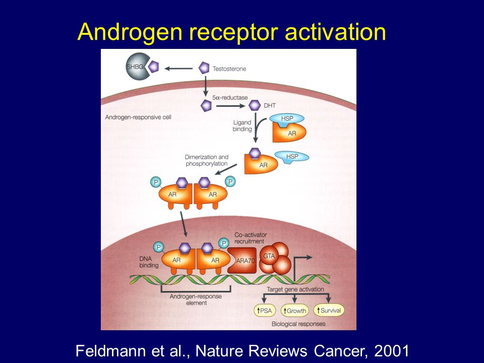 Feldmann et al., Nature Reviews Cancer, 2001