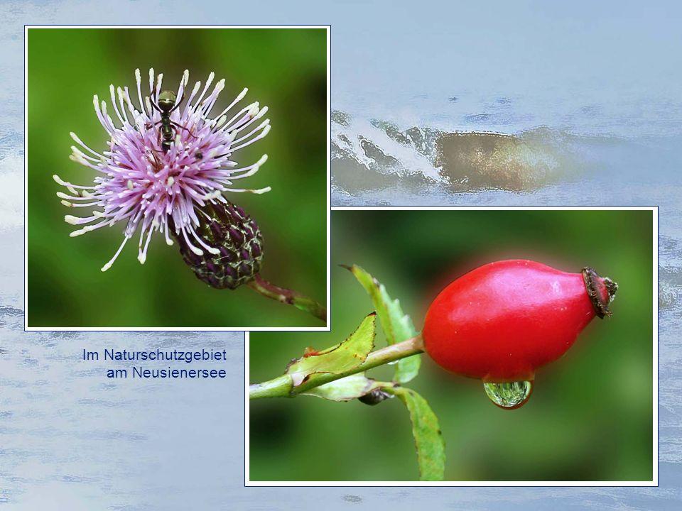 Im Naturschutzgebiet am Neusienersee
