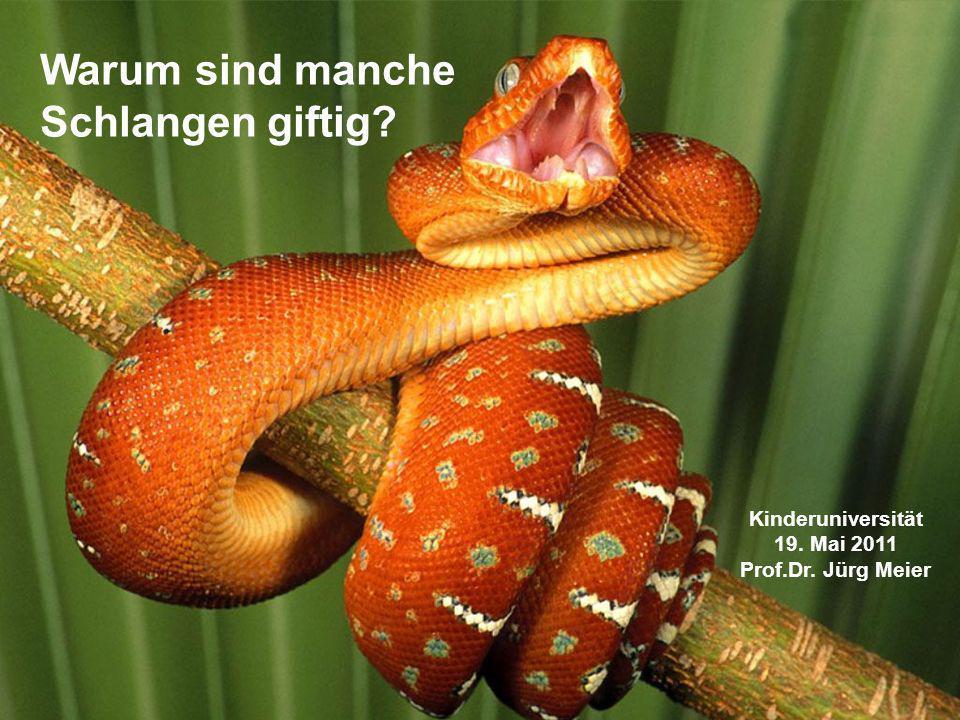 Warum sind manche Schlangen giftig