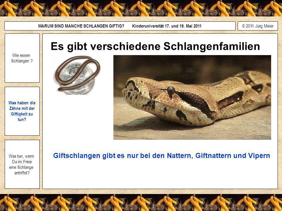 Es gibt verschiedene Schlangenfamilien